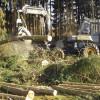 Europa Waldrodung