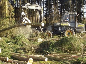 Europa Waldrodung Wald