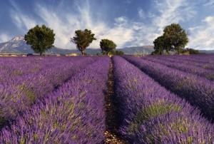 Einrichtungsstil Provence Lavendelfeld