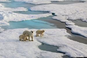 Klimakonferenz Eisschollen Eisbären
