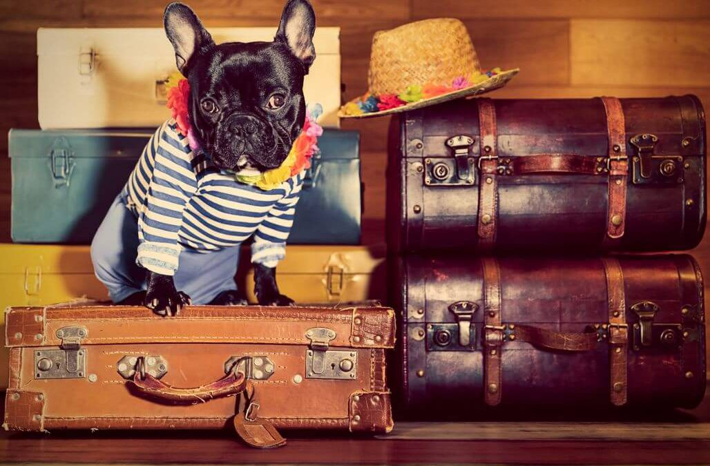 EU Hund Reise Koffer