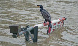 Vogel im Hochwasser
